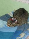 Tigrou se résigne à être traité comme une fille -- Cliquez pour voir l'image en entier
