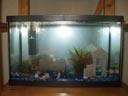 Le nouvel aquarium (avec Bubulle et Arc-en-ciel)